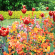 Spring tulips in St Regents Park, London — Stock Photo #45403829