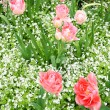 Spring tulips in St Regents Park, London — Stock Photo #45403833
