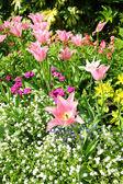 Spring tulips in St James park, London  — Stock Photo