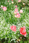 Spring tulips in St Regents Park, London — Stock Photo