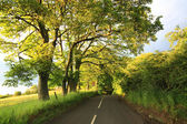 Beautiful old rural road with old oak trees — Stock Photo