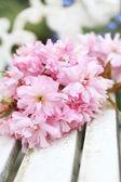 Spring Japanese cherry blossom — Stock Photo
