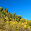 Autumn forest on the hillside — Stock Photo