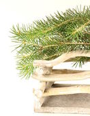 Composition de Noël sous le sapin vert — Photo