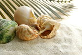Beach sand and seashells, concept of vacation — Stock Photo