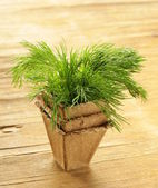 Bunch of organic dill on a wooden table — Stock Photo