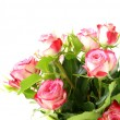 Stock Photo: Pink roses on white background