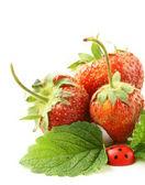 Ripe organic strawberries with green leaf — Stock Photo