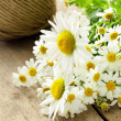 Bouquet of fresh daisies on a wooden background — Stock Photo