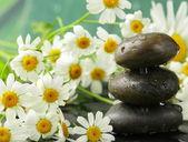 Pirámide de piedras negras, flores de manzanilla - concepto de spa — Foto de Stock