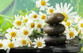 Pyramid of black stones, chamomile flowers - spa concept — Stock Photo