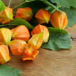 Orange physalis berries with green leaves — Stock Photo