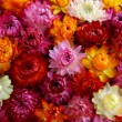 Background  of multicolored autumn flowers — Stock Photo