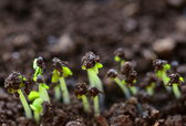 Macro shot of small green shoots sprouting from the ground — Stock Photo