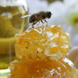 Macro shot of honey bee on a honeycomb (natural product) — Stock Photo #35536119
