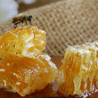 Macro shot of honey bee on a honeycomb (natural product) — Stock Photo #35536199