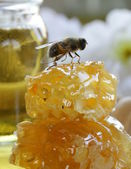 Macro shot of honey bee on a honeycomb (natural product) — Stockfoto
