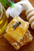 Macro shot of honey bee on a honeycomb (natural product) — Stock Photo