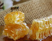 Macro shot of honey bee on a honeycomb (natural product) — Foto Stock
