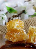 Honey bee on a honeycomb — Stockfoto