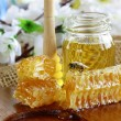 Honey bee on a honeycomb — Stock Photo