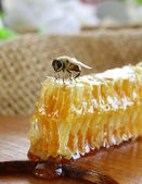 Honey bee on a honeycomb — Stock Photo