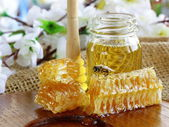 Honey bee on a honeycomb — Foto de Stock
