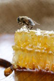 Honey bee on a honeycomb — Photo