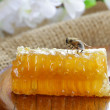 Natural organic sweet honeycomb — Stock Photo