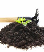 Green plant grows from the ground with garden tools on a white background — Stock Photo