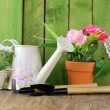Rustic still life watering can, flowers in pots, garden tools — Stock Photo #37991315