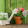 Rustic still life watering can, flowers in pots, garden tools — Stock Photo #38257889