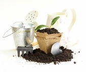 Green plant grows from the ground with garden tools — Foto Stock