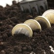 Stock Photo: Euro coins grow from ground - business concept
