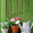 Rustic still life watering can, flowers in pots, garden tools — Stock Photo #38804675
