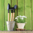 Rustic still life watering can, flowers in pots, garden tools — Stock Photo #38804763