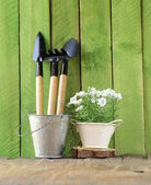 Rustic still life watering can, flowers in pots, garden tools — Stock Photo