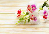 Beautiful white orchid flowers on a wooden background — Stock fotografie