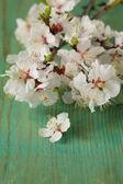 Jarní květy (orientální třešeň, jabloň) na dřevěný stůl — Stock fotografie
