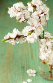 Spring blossom (oriental cherry, apple tree) on wooden table — Stock Photo