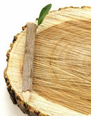 Matita in legno naturale con foglia verde su sfondo bianco — Stock fotografie
