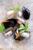 Fresh delicious seafood mussels with green parsley — Foto Stock