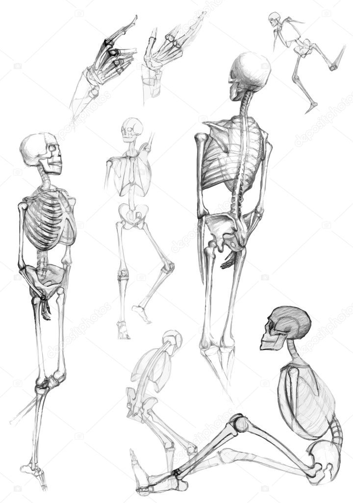 Cat Skeleton Drawing Ecosia