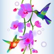 Seamless background with orchids and humming-birds — Stock Vector