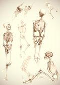 Sketch of skeletons - vector illustration — Stock Vector