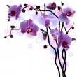 Vector branch of violet orchids — Stock Vector
