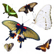 Set of isolated multicolored butterflies — Stock Photo
