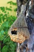 Bird House — Stockfoto