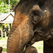 Elephant close up — Stock Photo #14579169