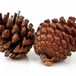 Stock Photo: Pine cones on white background